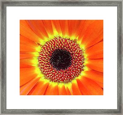 Orange Flower Macro Framed Print
