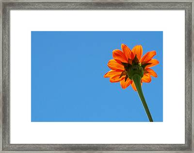 Orange Flower On Blue Sky Framed Print by Debbie Karnes