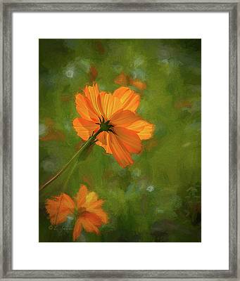 Orange Flower Power Framed Print
