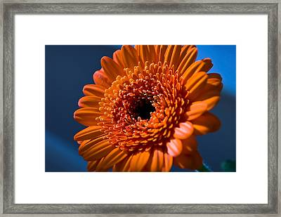Orange Flower Framed Print by Svetlana Sewell