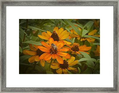 Orange Flowers And Bee Framed Print