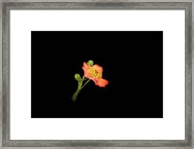 Orange Flowers In The Summer Framed Print