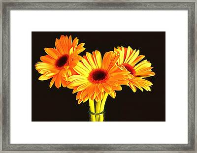 Orange Gerbera's Framed Print by Scott Carruthers