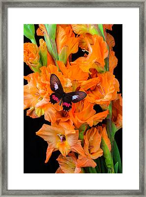 Orange Glad With Butterfly Framed Print by Garry Gay