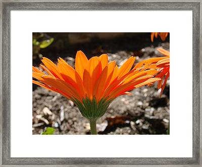 Orange Glory Framed Print