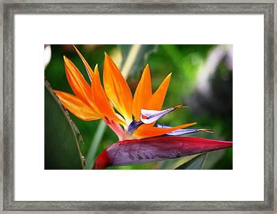 Orange Glow Framed Print by Lakida Mcnair
