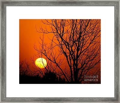 Orange Glow Framed Print by Lynn Reid