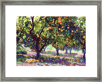 Orange Grove Of Citrus Fruit Trees Framed Print