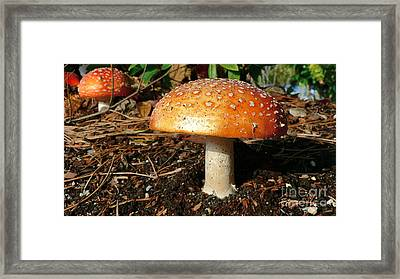 Framed Print featuring the photograph Orange Hat by Larry Keahey