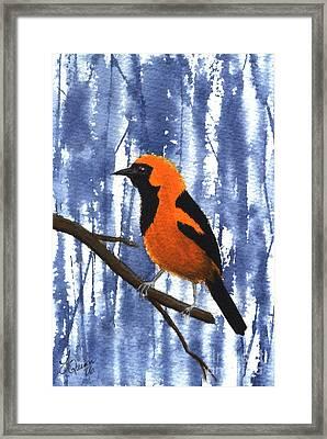 Orange-headed Oriole Framed Print