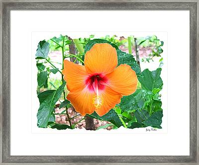 Orange Hibiscus Framed Print by Judy  Waller