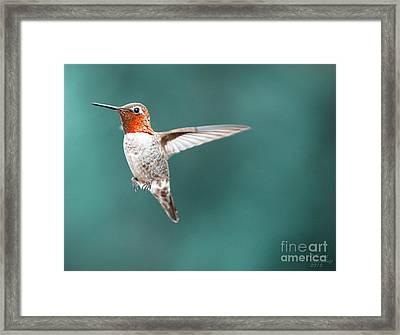 Orange Jewel Framed Print by David Millenheft