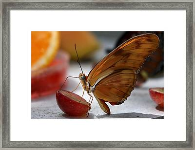 Orange Julia Butterfly Framed Print