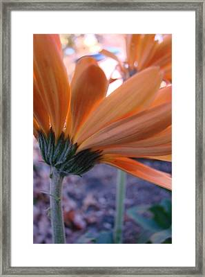 Orange Lady Framed Print