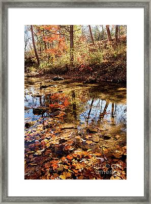 Framed Print featuring the photograph Orange Leaves by Iris Greenwell