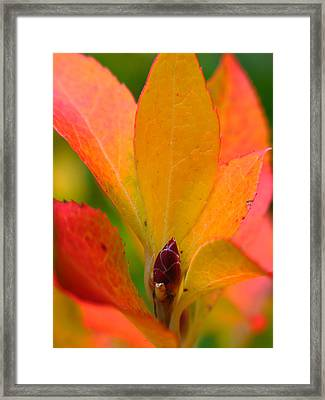 Orange Leaves Framed Print by Juergen Roth
