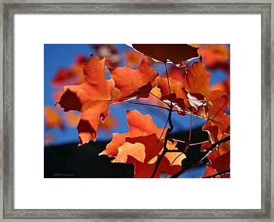 Orange Leaves Framed Print by Mikki Cucuzzo
