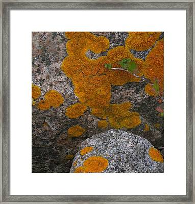 Framed Print featuring the photograph Orange Lichen On Granite by Mary Bedy