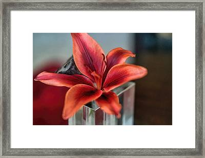 Framed Print featuring the photograph Orange Lilly And Her Companion Abstract by Diana Mary Sharpton