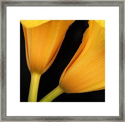 Orange Lily Abstract Framed Print by Tony Ramos