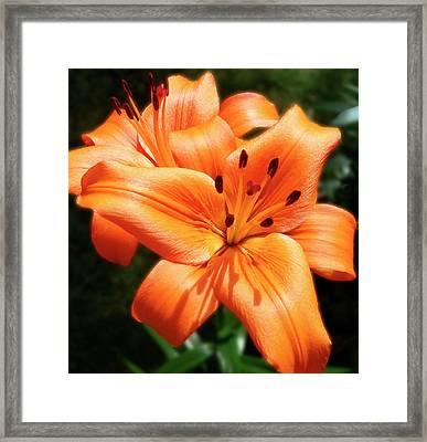 Orange Lily Joy Framed Print