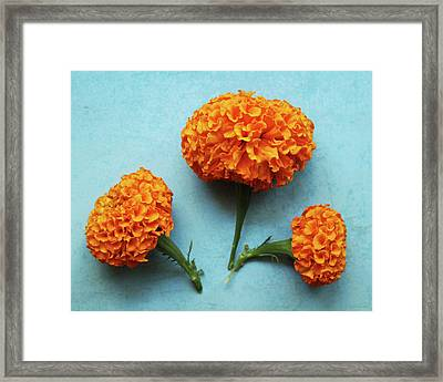 Orange Marigolds- By Linda Woods Framed Print