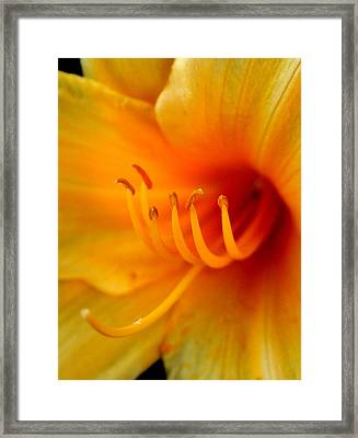 Orange Marmalade 2 Framed Print