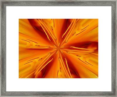 Orange Marmalade Framed Print