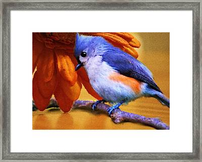 Orange Medley Framed Print