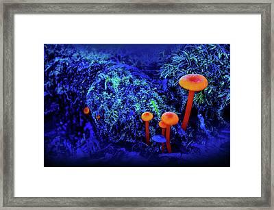 Orange Mushrooms Framed Print by Art Spectrum
