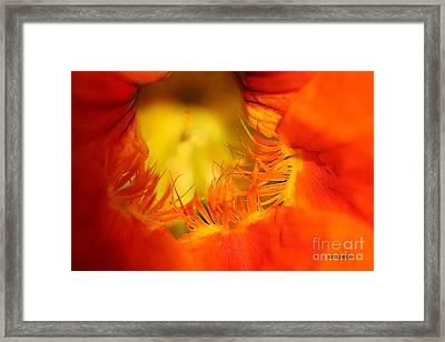 Orange Nasturtium Heart Framed Print