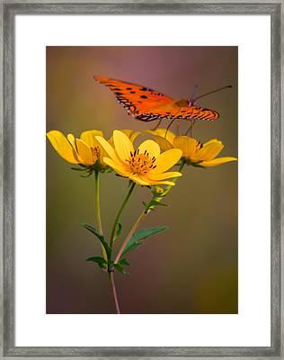 Orange On Yellow Framed Print by Parker Cunningham