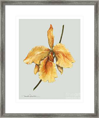 Orange Orchid Framed Print by Meridith Martens