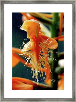 Fringed Orange Orchid Framed Print