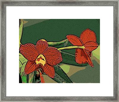 Orange Orchids Framed Print