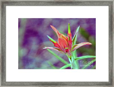 Orange Paintbrush Flower Framed Print
