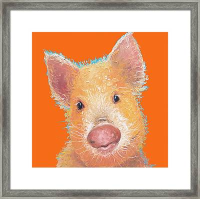 Pig Painting On Orange Background Framed Print by Jan Matson
