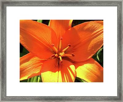 Orange Pop Framed Print