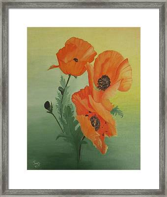 Orange Poppies Framed Print by Joan Taylor-Sullivant