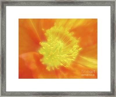 Orange Poppy Framed Print by Addie Hocynec