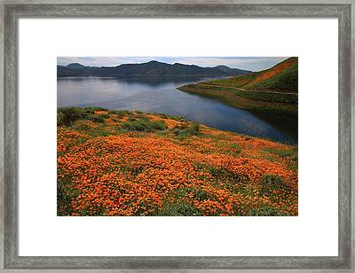 Orange Poppy Fields At Diamond Lake In California Framed Print