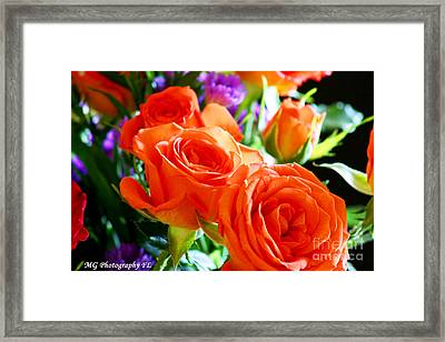 Framed Print featuring the photograph Orange Rose by Marty Gayler