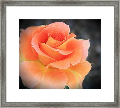 Orange Sherbert Framed Print by Marna Edwards Flavell