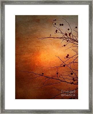 Orange Simplicity Framed Print by Tara Turner