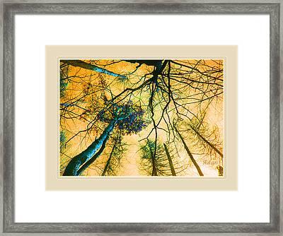 Orange Sky Tree Tops Framed Print by Felipe Adan Lerma