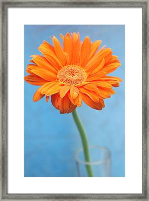 Orange Slanted Gerbera Framed Print by Photography by Gordana Adamovic Mladenovic