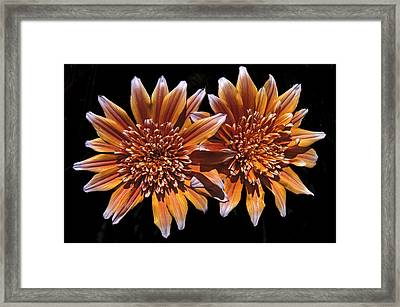 Orange South African Flowers Framed Print by Morris Finkelstein