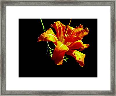 Orange Splendor Framed Print