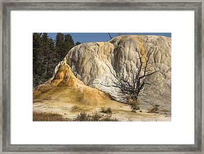 Orange Spring Mound Framed Print by Loree Johnson
