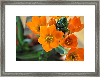 Orange Star Framed Print